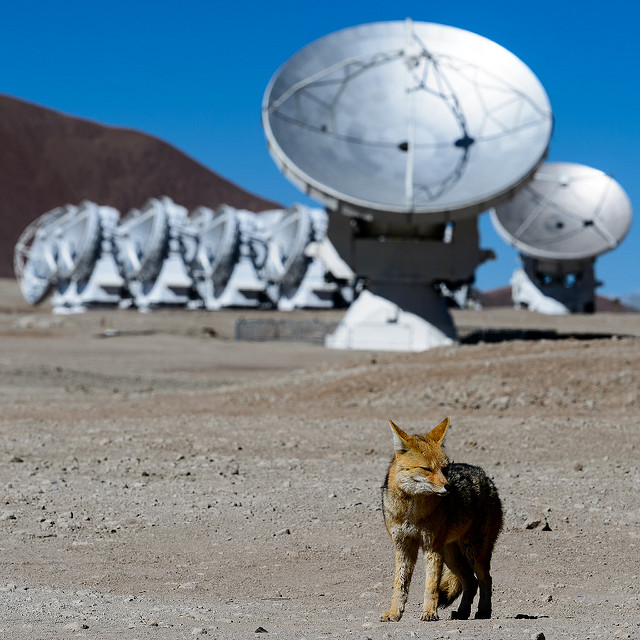 """""""The ALMA fox"""" by Alessandro Caproni, licensed under CC BY 2.0. ALMA is one of the international collaborations in which the NSF is involved."""